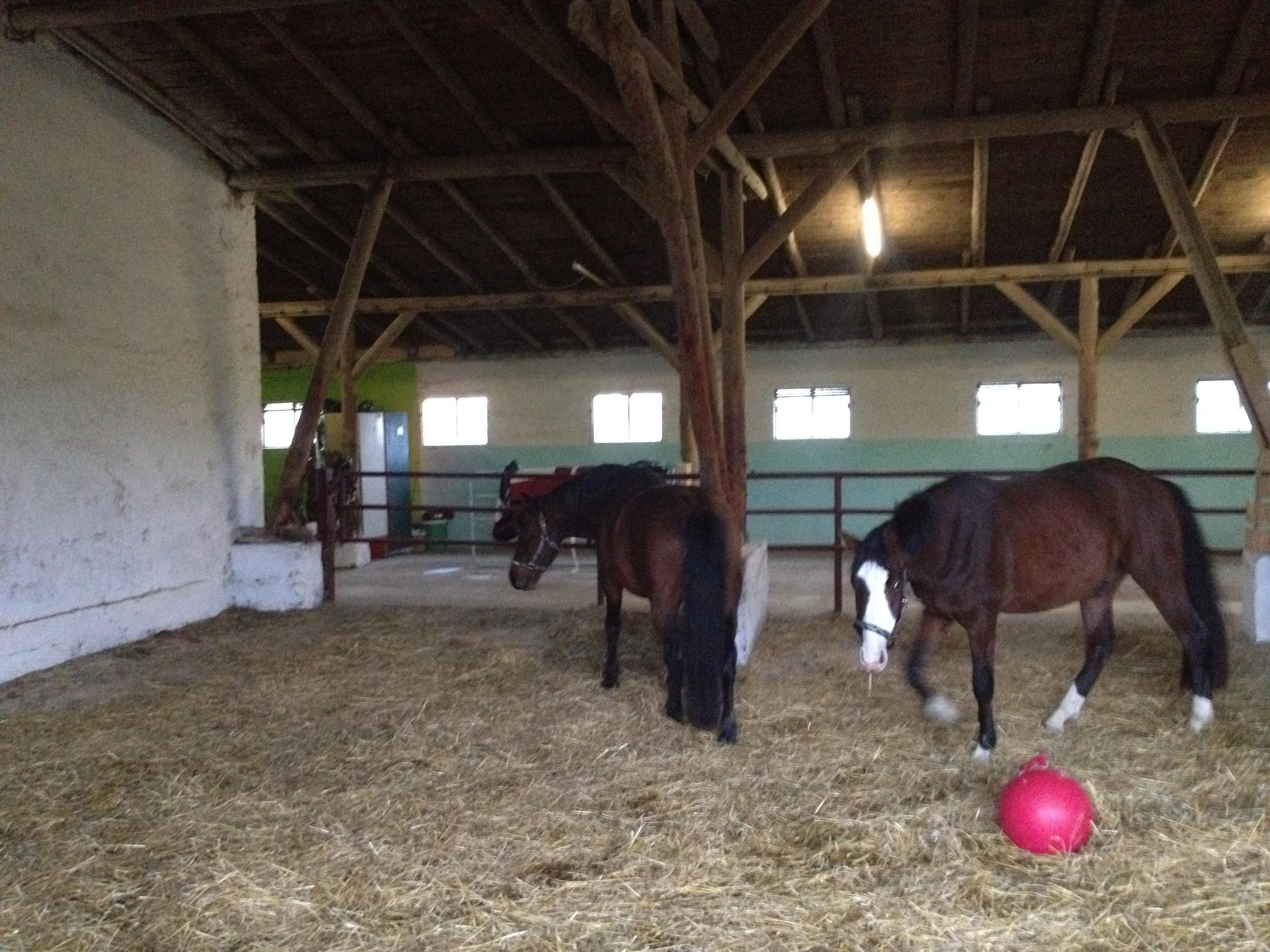 Pferde im Stroh